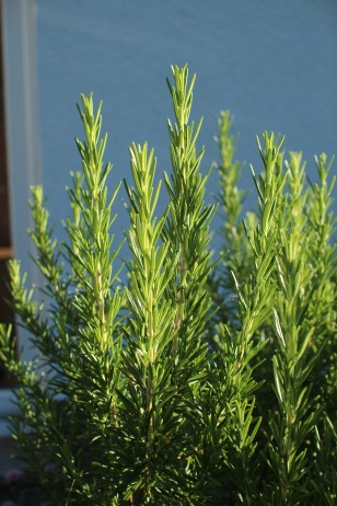 herbs-853767_1920