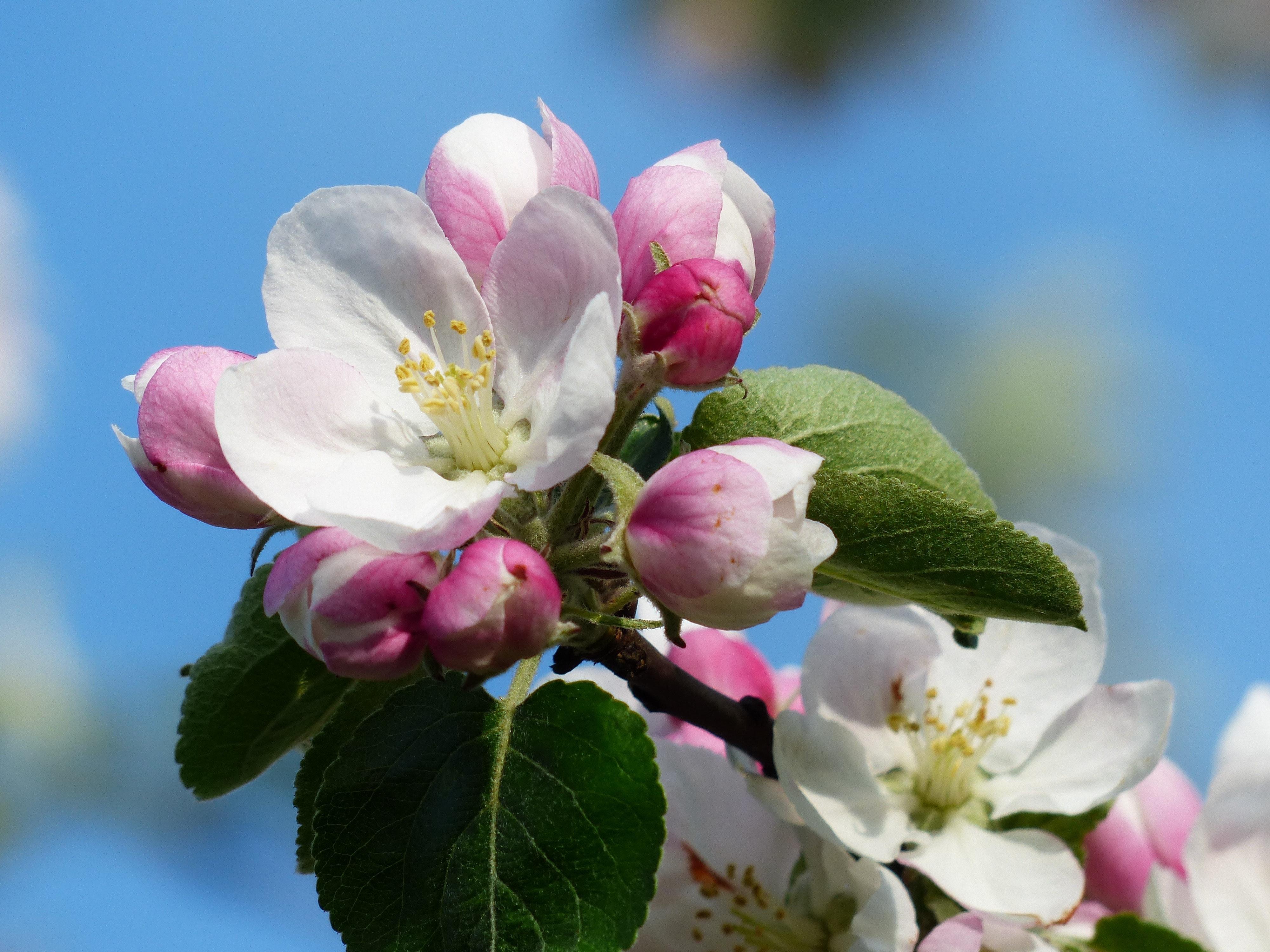 bloom-blossom-close-up-68169